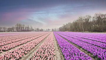 Blumenfeld in Pastellfarben von Sanne Dost