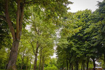 Trees in Almere - NL  van Elmar Marijn Roeper