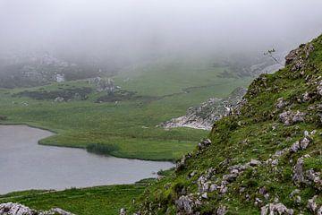 Berggeiten nabij Lago Ercina in Picos de Europa van Koen Henderickx