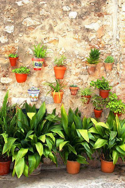 Muur met planten van Inge Hogenbijl