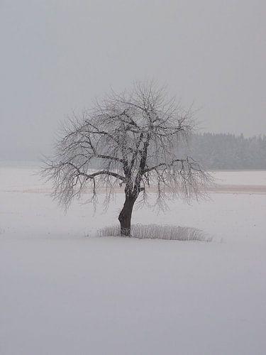 Winter 04 von