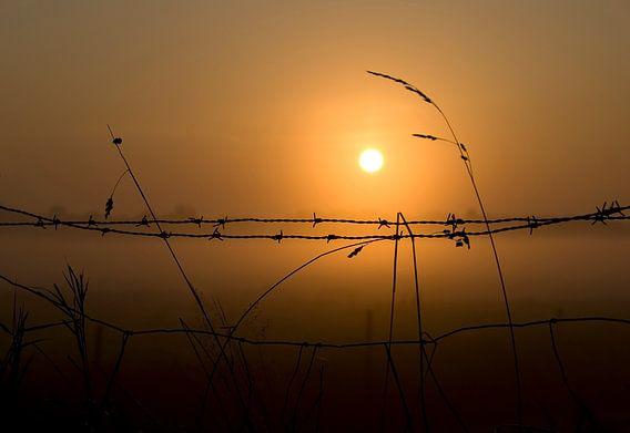 Morning glow........