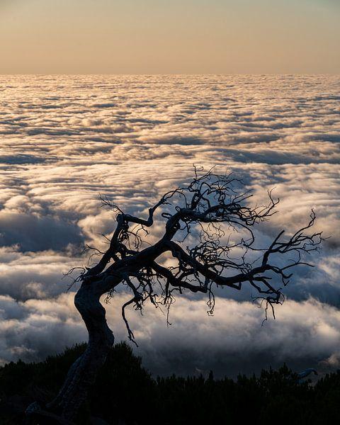 schaduwboom van Stefan Bauwens Photography