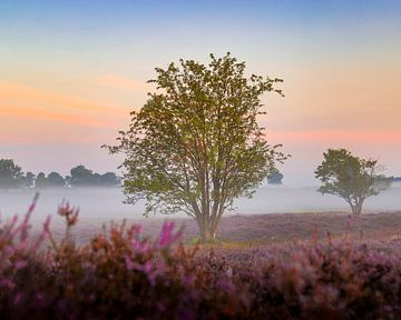 Zonsopkomst, De Hoorneboegse Heide van Anthony Trabano