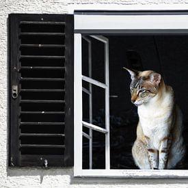 Vue de la fenêtre - chat siamois sur Christine Nöhmeier