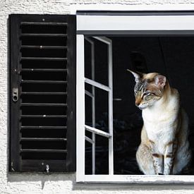 Vensterweergave - Siamese kat van Christine Nöhmeier