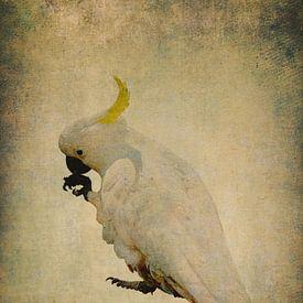 Geelkuif Kaketoe 5 van Anouschka Hendriks