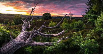 zonsopkomst op de nationaal park Veluwezoom von Martijn van Steenbergen