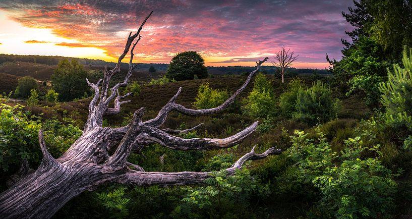 zonsopkomst op de nationaal park Veluwezoom van Martijn van Steenbergen