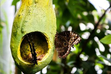 Vlinders von Iris van der Veen