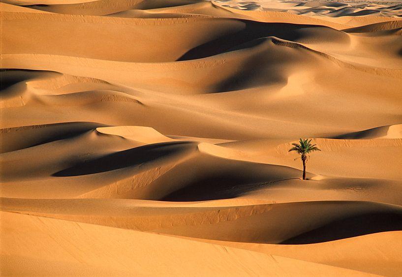 Einsame Palme in Sanddünen. Wüste Sahara. von Frans Lemmens