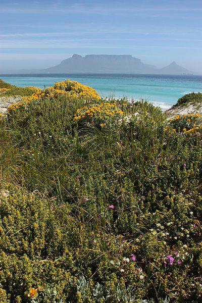 southafrica ... table mountain 02 van Meleah Fotografie