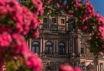 Blick durch die Blumen auf die Semperoper von Marc-Sven Kirsch