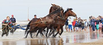 paarden aan het werk voor de Amelandse reddingsboot. van