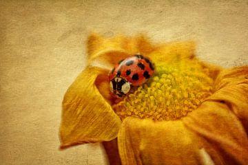 Marienkäfer auf Blüte von Claudia Evans