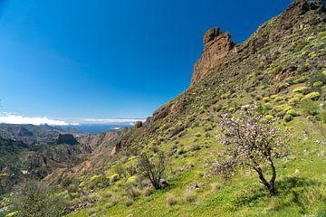 Gran Canaria, Canarische Eilanden van Peter Schickert