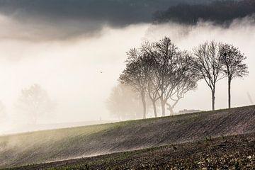 Nebel am Hang des Gulperbergs von Rob Boon