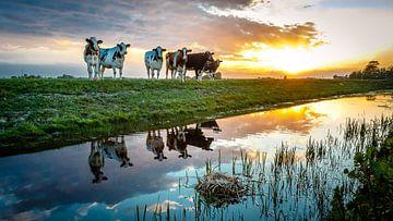 Gespiegelte Kühe von Jaap Terpstra