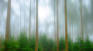 Forêt de pins brumeux lors d'une froide journée d'hiver sur Sjoerd van der Wal