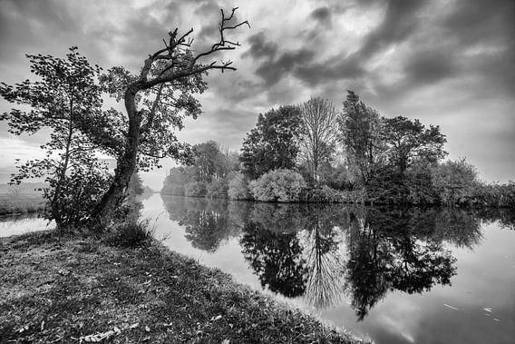 Bomen langs de waterkant met reflectie in zwart-wit