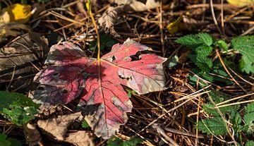 Autumn... van Bert - Photostreamkatwijk