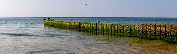 Podium met meeuwen op het strand bij Kampen van Alexander Wolff