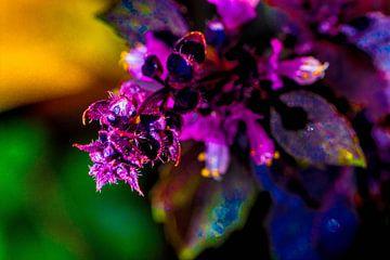 Kleurenpracht van Roel Verver