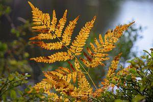Kleur van de herfst van Johanna Kool