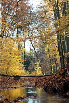 Bomen in herfstkleuren. van Ingrid Meuleman