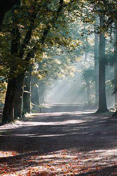 Mist in het zeister bos von
