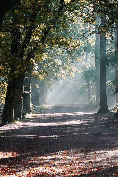Mist in het zeister bos van Ramon Bovenlander