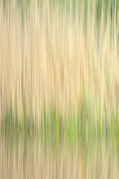 Four seasons: Lente van Gert van Lagen