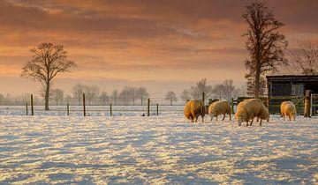 Zonsondergang met de schaapjes en de sneeuw van Edward Sarkisian