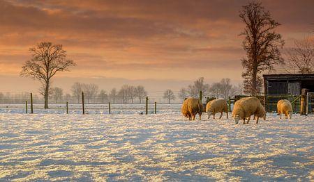 Zonsondergang met de schaapjes en de sneeuw