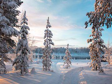 Zonsopkomst in Winters Lapland van Duane Wemmers