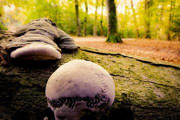 Op een mooie paddenstoel van Marjolein Boltjes
