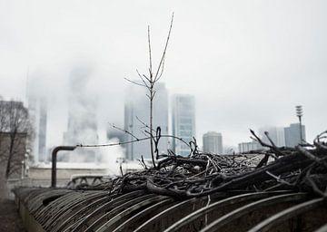 'Tak', Chicago von Martine Joanne