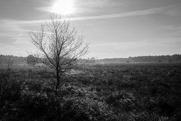 Krachtige wintertakken von Tamara van Kilsdonk