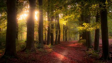 Forêt de conte de fées sur Emajeur Fotografie