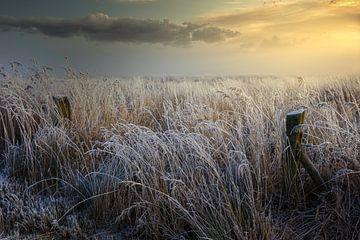 Riet in de mist tijdens zonsopkomst van Peter Bolman