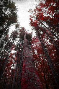 Roter Herbstwald von Toni Stauche