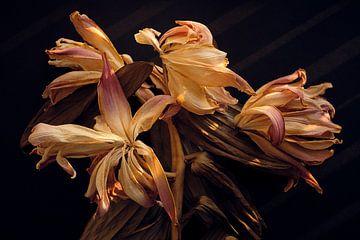 Gedroogde Lelies in warm herfst licht van Karel Ham