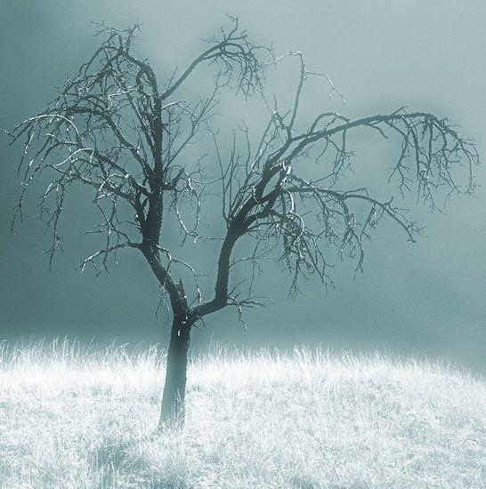 Silent Sadness van Sigrid Klop