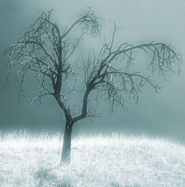 Silent Sadness