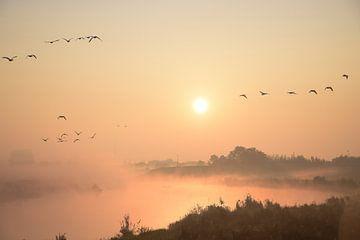 September Morn van Ingrid de Vos - Boom