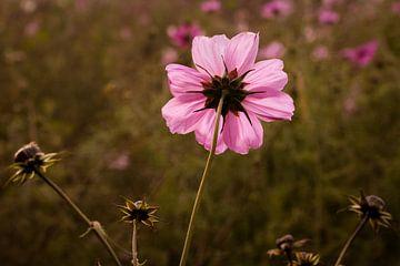 Wilde Blume von DroomGans
