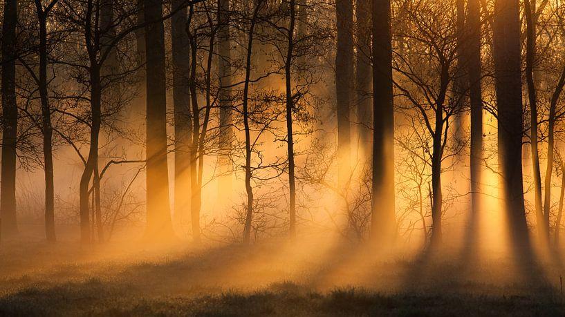 misty morning van Desiree Tibosch