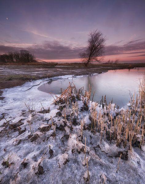 Biesbosch winterlandschap van Marcel van Balkom