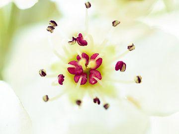 Blüte von Maikel Brands