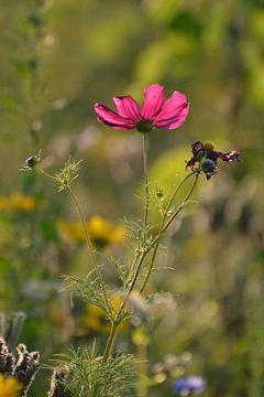 Roze bloem in veld von Jeantina Lensen-Jansen